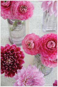 Pink Dahlias