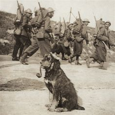 """french infantry with roadside """"mascot"""""""