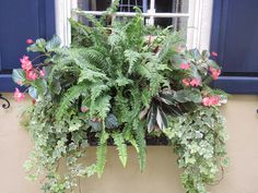 shade window box begonias ivy ferns Flower window box / planter for shade. Pink and green for southern warm climate, window box easy planting Window Box Plants, Window Box Flowers, Window Planter Boxes, Shade Flowers, Shade Plants, Flower Boxes, Window Boxes Summer, Planters Shade, Container Plants