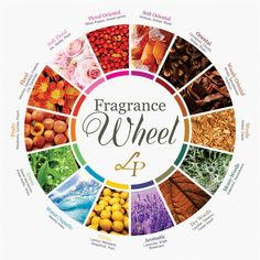 The difference between Perfume, Cologne, Eau De Toilette, and more - Do you get confused when you see soft oriental. floral oriental, dry woods or woody moss? Perfume Parfum, Perfume Zara, Perfume Diesel, Perfume Scents, Fragrance Parfum, Perfume Good Girl, Bath Body Works, Ideas, Jars