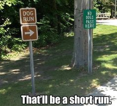 funny caption picture dog run no dogs past this point gonna be a short run