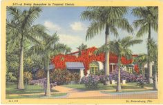 vintage florida flamingo postcard pictures   Vintage Florida Postcard - St Petersburg - Pretty Bungalow Tropical ...