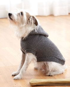 10 Stunning Examples Of Beautiful Fall Dog Sweaters - Free Knitting Patterns - Handy Little Me Crochet Dog Sweater Free Pattern, Knitting Patterns Free Dog, Dog Coat Pattern, Knit Dog Sweater, Free Knitting, Knit Patterns, Sweater Patterns, Free Crochet, Hooded Sweater