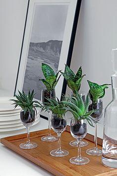 Succulents in Bowls - Amazing Ideas Succulents In Glass, Cacti And Succulents, Planting Succulents, Terrarium Plants, Succulent Terrarium, Indoor Water Garden, Indoor Plants, House Plants Decor, Plant Decor