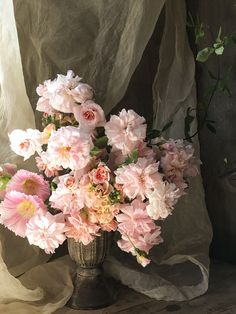 Blushing bridal Cecile Brunner polyantha rose with stock and hollyhocks. Cultivated by Christin in Victoria BC