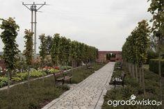 Ogród nie tylko bukszpanowy - część III - strona 354 - Forum ogrodnicze - Ogrodowisko