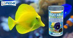 Alimento composto in granuli per tutti i tipi di pesci erbivori d'acqua marina.