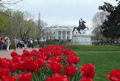 The White House, Washington DC (Photo credit: Flickr user, asmythie)    Our first president, George Washington, selected the site for the White House in 1791. The cornerstone was laid in 1792 and a competition design submitted by Irish-born architect James Hoban was chosen.