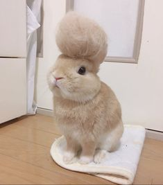 Bunny with a bun? -(Note to self: sent to A.L. 10-9-18)