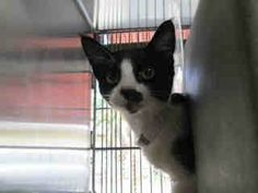 Many more rescue organizations, fosters, adopters, donors & other volunteers are urgently needed to save dogs & cats who are in dire circumstances Help Needed, Tuxedo Cats, Animal Rights, Good News, Animal Rescue, Boston Terrier, Dog Cat, Adoption, Homes