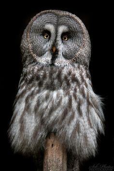 "misterowlhoots: ""(via 500px / Piercing eyes by Seb Photos) """