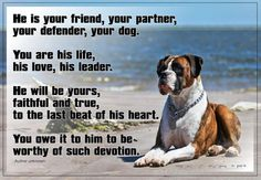 A dog's love is like no other