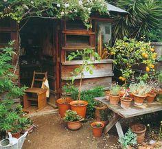 orange // trees // pots // timber