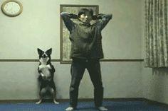 FUNNY DOG AND MAN - gif