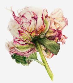 the garden: Peony, Iris & Lily / Watercolors by British Artist Marie Burke