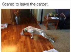 23 funny animal pictures of the day - funny animals - daily lol pics Funny Animal Memes, Dog Memes, Cute Funny Animals, Funny Cute, Funny Dogs, Funny Memes, Hilarious, Animal Humor, Meme Meme
