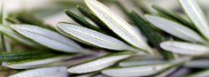 'Rosemary Is For Remembrance' - Science confirms wisdom of the ancients