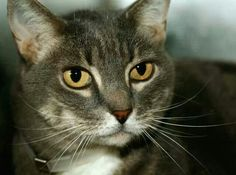 Please save this gorgeous girl from death at ACC shelter in New York City URGENT visit pets on death row on Facebook. Only has an hour to be rescued. ....