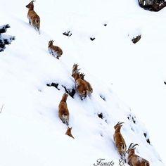Le magie della natura! #valtellina #sondrio #bormio #livigno #valmalenco #madesimo #europe #alpi #lombardia #italia #landscape #natura #montagna #travel #viaggiare #nature #photooftheday #mountain #wildlife #instanature  #Repost @bormio_tourism with @repostapp. ・・・ Escursione di famiglia nel Parco Nazionale dello Stelvio  Family hiking day in the Stelvio National Park  Ph. Fausto Compagnoni
