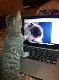This cat who's worried that long-distance love is too difficult. | 33 Animals That Want Nothing To Do WithLove