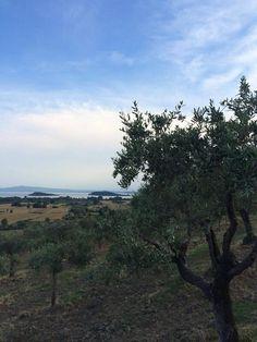 Vista sul lago #AlTrasimeno  foto di @ChiaraDall