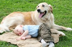 babies with pets | How to prepare your pet for the new baby beforehand