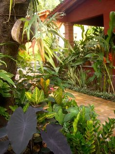 tropical plant collector's garden from the Art of Gardening....many ideas!