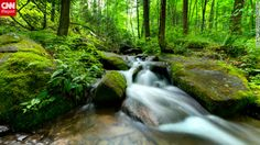 A creek rushes through the brilliant green of Great Smoky Mountains National Park.