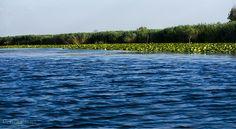 Danube Delta #2