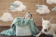 Bull terriers y bebé  Bebé mascota Amor perruno