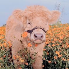 Cute Baby Cow, Baby Animals Super Cute, Cute Wild Animals, Cute Cows, Cute Little Animals, Cute Funny Animals, Animals Beautiful, Cow Pictures, Baby Animals Pictures