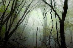 kultainen metsä