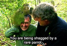 """One of my favourite scenes from """"Last Chance to See."""" Stephen Fry laughing at Mark Carwardine getting friendly with a Kakapo parrot. Animals Of The World, Animals And Pets, Funny Animals, Cute Animals, Kakapo Parrot, Parrot Toys, Funny Birds, My Animal, Funny Posts"""