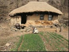 grandma in the mountain, Korea --- scenes that have mostly disappeared from Korea. Korean Traditional, Traditional House, See Think Wonder, Off Grid Survival, Historical Images, Landscape Photos, Old Pictures, Ecology, South Korea