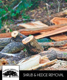 North American Tree Service http://www.kudzu.com/m/North-American-Tree-Service-30470930