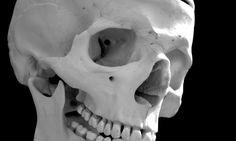 http://www.heritagedaily.com/2016/11/words-and-bones-tell-a-similar-story-about-deep-history/113276