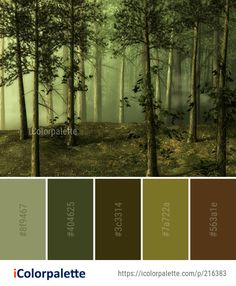 Color Palette Ideas from Ecosystem Forest Woodland Image