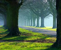 The Avenue trees in mists and sun