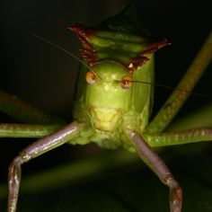 Across the animal world, many species use communication signals, including mating calls by males, but conspicuous calling can be risky because eavesdropping predators use these calls to find prey. A new eavesdropping study of bats and katydids provides evidence that sensory differences can influence the 'evolutionary arms race' between predators and prey.