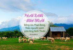 Việt Nam đất nước tôi yêu I Đồng cừu Phan Rang, Ninh Thuận  #Travel #VietNam #NinhThuan