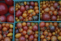 different ideas for preserving tomatoes (cherry tomato bisque, oven dried heirloom tomatoes, and quick tomato sauce) Preserving Tomatoes, Canning Tomatoes, Growing Tomatoes, Preserving Food, Dried Tomatoes, Heirloom Tomatoes, Cherry Tomatoes, How To Store Tomatoes, Canning Food Preservation