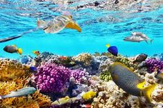 Image result for Coral Reef New Zealand