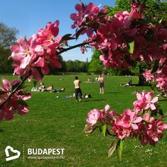 Budapest - Margaret Island - Green ship' of the River Danube, the home of springs, baths and green meadows. #Travel