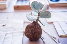 POMEGRANATE #1 by HAMIDE DESIGN STUDIO x VESS   Planteplaneter   Plant Planets Pomegranate, Planets, Designers, Studio, Interior, Creative, Granada, Indoor, Pomegranates