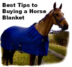 Some tips to buying a horse blanket!