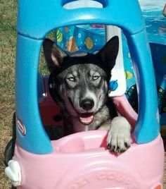 My dog Junior. Lindy, Redmond, Oregon. 5/5/13.