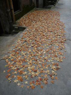 Guangzhou starfish
