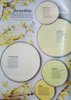 Forsythia -- Better Homes and Gardens Jan 2016