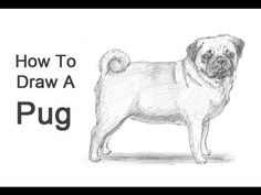 How to Draw a Pug - YouTube