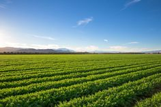A breakthrough has been made in investigating salt tolerance in plants which…